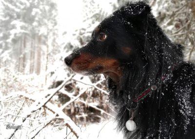 Pasji horizont, profil, zima in sneg