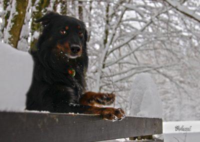 Pasji horizont, klopca, zima in sneg