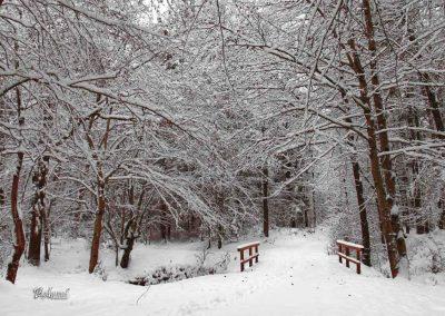 Izlet Sračja dolina, most, zima in sneg
