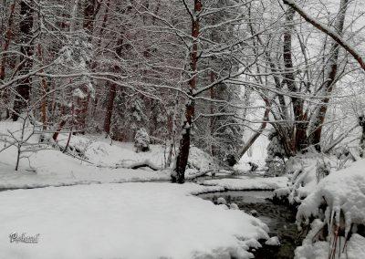 Izlet Sračja dolina, gozd, zima in sneg