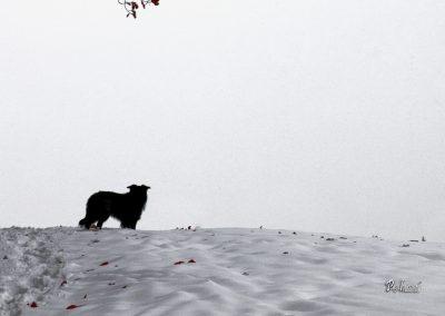 Pasji horizont, bela zima, sneg