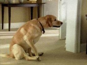 Okužba psa z glistami in trakuljami