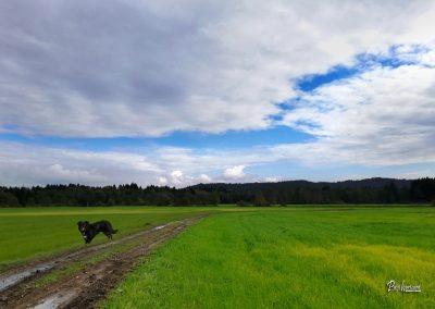 Pasji horoizont, Corona sprehodi