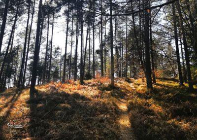 Debeli vrh (Koseško hrib), Topole