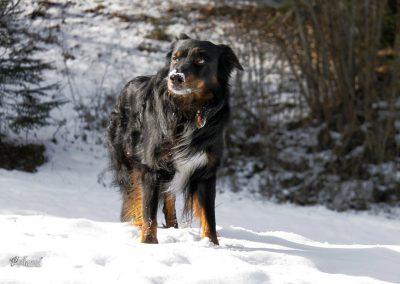 Pasji horizont, sneg