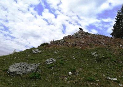 Planina Stamare