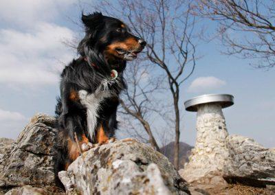 Polhograjska Grmada, vrh, razgledna plošča, Pasji horizont