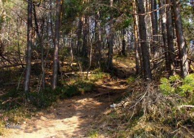 Sv. Uršula, pot skozi gozd proti Polhograjski Grmadi