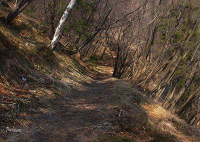Polhograjska Grmada, prečenje, gozd