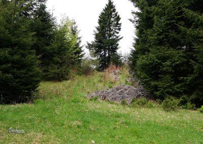 Skozi gozd na planino Stamare