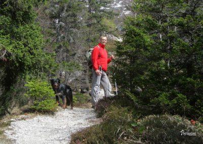 Pot na Golico skozi gozd