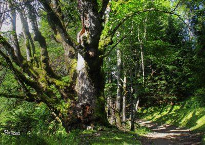 Srednji vrh, pot na Trupejevo poldne