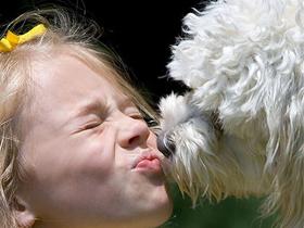 Pasji poljubček da ali ne?
