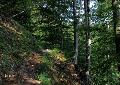Skozi gozd od doma na Govejku proti Osovniku