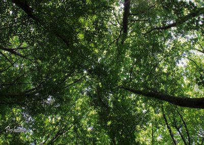 Jamnik, krošnje dreves