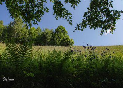 Jamnik, travnik ob poti iz Nemilj