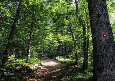 Sveti Primož in Felicijan, Jamnik, gozd, pot iz Nemilj