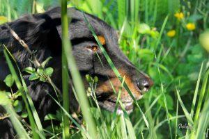 Zakaj pes je travo?
