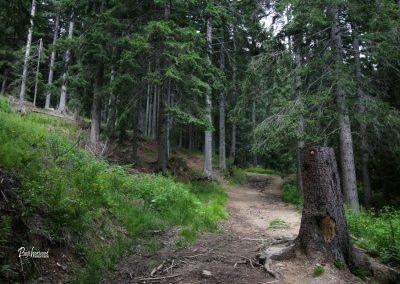 Vračanje skozi gozd na Podolševo