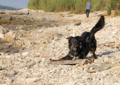 Pasja igra, divja plaža Kažela, Pasji horizont