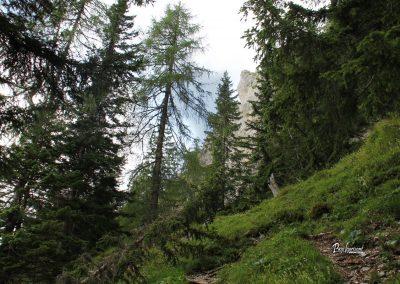 Pogled nazaj, pot na Govco (Olševa)