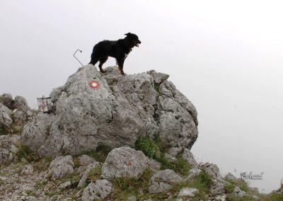 Govca (Olševa), vrh, skrinjica, Pasji horizont