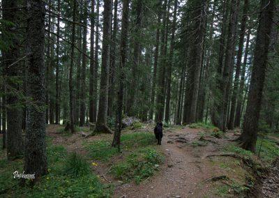Skozi gozd nazaj proti Podolševi