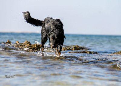 Pes v morju, Pasji horizont