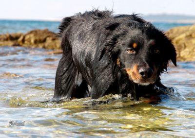 Pes plava, Pasji horizont