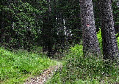Podolševa, pot skozi gozd proti Potočki zijalki