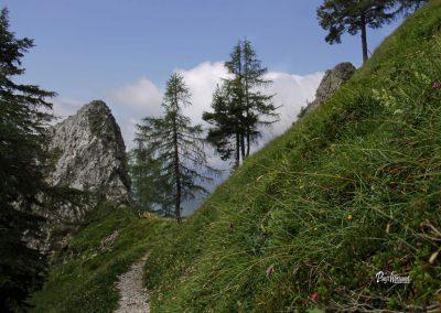 Pot na Govco (Olševa), pogled nazaj