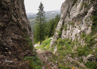 Pot od Potočke zijalke na Govco (Olševa)