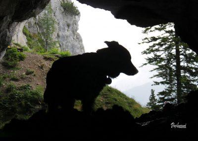 Potočka zijalka, v jami, Pasji horizont