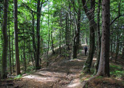 Pot skozi gozd, ki vodi na Ajdno