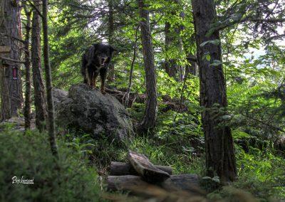 Pot skozi gozd na Valvasorjev dom, Pasji horizont