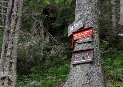 Smerne table za Potočko zijalko v gozdu