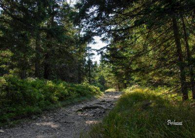 Pot skozi gozd na Črni vrh, Ribniško Pohorje