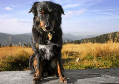 Jezerski vrh, Pasji horizont