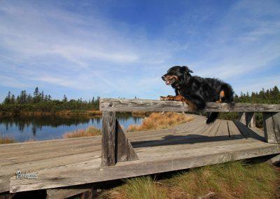 Lovrenška jezera, poziranje na klopci, Pasji horizont