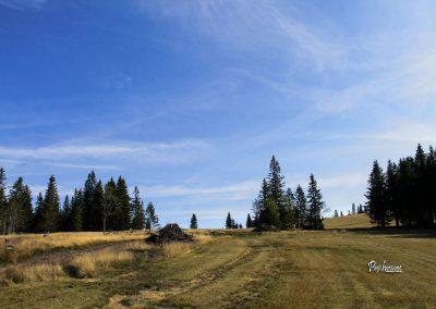 Ribnisko Pohorje, manjši vzpon, gozdni rezervat