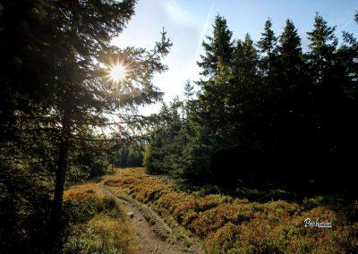 Ribniško jezero, gozd