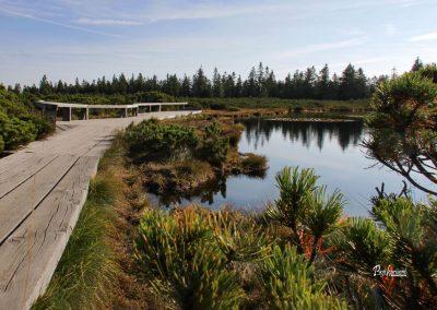 Ribniško jezero, lesena pot, klopca