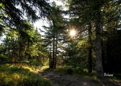 Pot skozi gozd proti Ribniškem jezeru