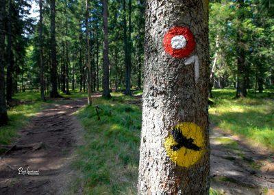Siklarica, sedlo, oznake na drevesu