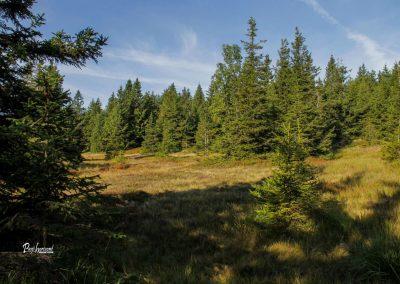 Skozi gozd proti Lovrenškim jezerom